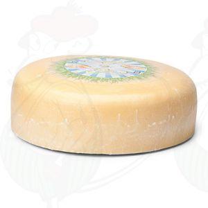 Jong Belegen Biologische Kaas | Extra Kwaliteit | Hele kaas 7,5 kilo