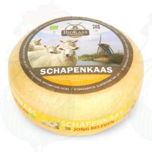 Biologische Schapenkaas | Extra Kwaliteit | Hele kaas 5,4 kilo